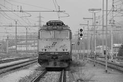 domo II set 64 #16 (train_spotting) Tags: beuracardezza domoii tigre tigrone e652156 trenitaliacargo trenitalia ticargo divisionecargo mir merciitaliarail nikond7100