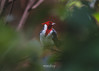 Nature's delight (Antonio Diaz Photography) Tags: nyc new york central park birds love nature