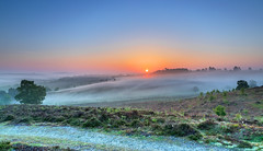 Misty Valley (nicklucas2) Tags: newforest rockfordcommon mist bracken tree sunrise sun