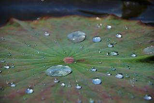 Natural Hydrophobic