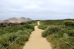 (andthensom) Tags: green trail overcast sand path beach carmel monterey california pointlobos