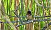 Barn Swallow (Nelges) Tags: barnswallow gwimages panasoniclumixfz300 ontario stcatharines glendalequarry green bird