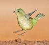 Jumpin Warbler (MyKeyC) Tags: santaclara texas edinburg ranch hectorastorga female warbler paintedbunting jumping