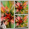 Autumn colours (PaulO Classic. ©) Tags: photoshop picmonkey sunflowers 3d samsung deepdream