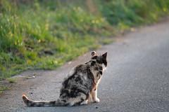 LR-DSCF9816 (studiofuntas) Tags: machineko yodogawa straycat higashiyodogawaku joggingroad road pet grass animal soil cat
