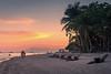 Dumaluan Beach (Andrew Hosegood) Tags: dumaluan beach panglao bohol philippines sunset tropical palm tree sea colour andrew hosegood