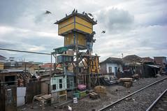 (kuuan) Tags: doves alongrailwaytracks indonesia voigtländerheliarf4515mm manualfocus mf voigtländer15mm aspherical f4515mm superwideheliar apsc sonynex5n surabaya street java