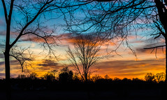 Bare Branches (tquist24) Tags: goshen indiana nikon nikond5300 outdoor blue branches clouds color evening orange rural silhouette sky sunset tree trees