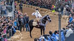 Oristano111 (siegele) Tags: fastnacht fasnacht fasching karneval carnevale carnaval sardinien maschere carrasegare sartiglia oristano
