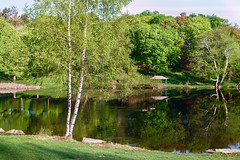 Idyllic: Good Morning Green Hill Pond (Chancy Rendezvous) Tags: chancy rendezvous dave lawler blurgasm greenhillpark greenhill park pond lake geese birch trees reflection shore leaves spring worcester massachusetts landscape