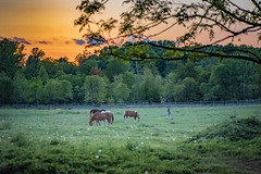 Rounding Up Horses at Sunset (t conway) Tags:
