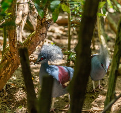 _MG_2128 (waynetywater) Tags: asia adventure animals canon blue bird dawn 6d red landscape ngc nature nationalgeographic negros incebucitycebuislandphilippines ef yellow f4l feathers green garden island is light life photography travelplanet tropical tree travelworld usm world