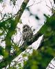 Benny (Jacob Valerio) Tags: jake valerio jacob nikon d800 ohio oak openings barred owl