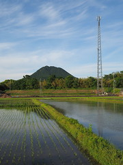 Rice paddies, cell phone tower, and Mikamiyama (Greg Peterson in Japan) Tags: ritto 栗東市 shiga fields landscapes rice 三上山 田圃 mikamiyama 植物 japan tsuji 滋賀県 mountains plants shigaprefecture
