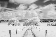Landscape. (gillesfrancotte) Tags: 2018 hoyar72 ir mai outdoor piromboeuf campagne countryside extérieur field fog grass grassland infrared infrarouge landscape landschap longexposure may meadow mist nature outside paysage plaine printemps rural spring tree blackandwhite bw nikonpassion
