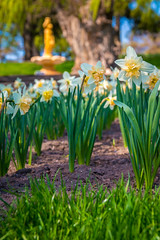 Daffodils in front of the Fountain (A Great Capture) Tags: spring daffodils gardens fountain edwardsgardens agreatcapture agc wwwagreatcapturecom adjm ash2276 ashleylduffus ald mobilejay jamesmitchell toronto on ontario canada canadian photographer northamerica torontoexplore springtime printemps 2018