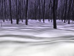ÉrablièreSte-Marthe (JOLAN2012) Tags: arbres hiver neige