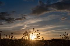 Chama Sunset (Kevin VanEmburgh Photography) Tags: chama colorado durango explore kevinvanemburghphotography nature newmexico nikon ontheroad outside southwest travel sun sunlight nm sage brush endofday mountains northernnewmexico wild