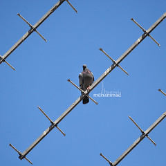 He.. (mhd.hamwi) Tags: he blue bird alone lonely nobody mrnobody nikon nikond5000 syria syrian damascus sky reality mhdhamwi mohammadhamwi middleeast abstract abstractism pattern