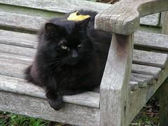 Highgate 21 (W i l l a r d) Tags: highgate cemetery cimiterio cemitério friedhof london cat