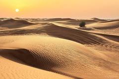 Arabian desert (Rita Eberle-Wessner) Tags: landscape landschaft wüste desert dünen dunes sand arabia arabien sharjah schardscha vereinigtearabischeemirate emirates vae uae arabiandesert sunset sonnenuntergang abend evening