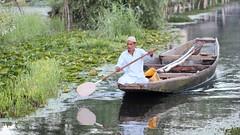 Buyer rows in (Nagarjun) Tags: floatingvegetablemarket flowers dallake kashmir srinagar commerce trade veggies kohlrabi dawn morning sunrise green