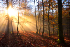 Golden shining (Hector Prada) Tags: forest autumn fog mist light trees moss magic shadows backlight leaves sunlight golden bosque otoño niebla bruma neblina luz árbol musgo mágico sombras dorado contraluz naturaleza nature woods euskalherria paísvasco basquecountry