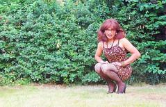 robin or redbreast  [Erithacus rubecula] in the garden (Katvarina) Tags: crossdress crossdresser crossdressing transgender tgirl transgirl transidentity transpeople kat