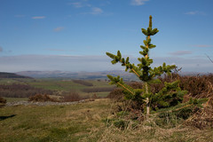 It's Christmas! (music_man800) Tags: rothbury alnwick northumberland b6341 road viewpoint view scenery landscape nature natural light early morning cloud blue sky sun weather still clear april easter tree sapling canon 700d prime lens lightroom adobe edit creative photography outdoors uk united kingdom 2018 holiday drive scene
