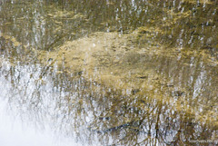 Волинське болото InterNetri Ukraine 14