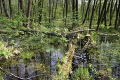 IMGP14144 (Łukasz Z.) Tags: lubelskie rzeczpospolitapolska poleskiparknarodowy nationalpark sigma1750mmf28exdchsm pentaxk3