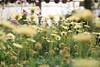 The earth laughs in flowers (84) (Polis Poliviou) Tags: naturepics naturephotography environment relax relaxing calming cyprus life living enjoyable colour colourful mediterranean travel beautyinnature rural countryside agricultural winter flowers plant floral flora winterblossom botany bulbs green white wallpaper herbs cyprustheallyearroundisland cyprusinyourheart yearroundisland zypern republicofcyprus κύπροσ cipro кипър chypre ©polispoliviou2018 polispoliviou polis poliviou πολυσ πολυβιου flowerbulb flowerbulbs ranunculus petals garden gardening gardeners vase colors spring yellow