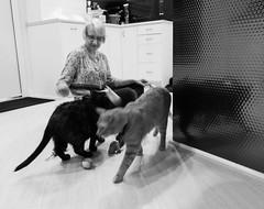 IMG_4135 (jaglazier) Tags: 2018 51018 adults animals birthdays bloomington cats ellen ellenquardokus indiana isis kittens mammals may parties portraits toys usa walking women copyright2018jamesaglazier interiors tiger unitedstates