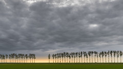Spring evening (Bertrand Thiéfaine) Tags: 2018 d850 avril manche normandie printemps soir arbres bordée nuages nature soleilcouchant prairie