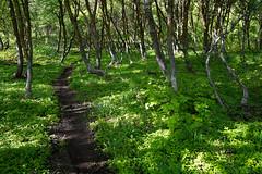 DSC00751 (kyleddsn) Tags: hiking utah ogden spring