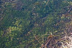 Волинське болото Еладея InterNetri Ukraine 21
