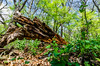 Forest wonderments (NetAgra) Tags: wood nature decay downtree iceagetrail janesville life tree death milton rotten rockcounty storrslakesegment