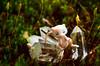 BOB_1088 (.::Avalon Jane::.) Tags: mew ミュウ plush toyphotography ポケモン pokemon nintendo toy figure nerd