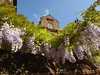 Wisteria smile (JuliaC2006) Tags: wisteria purple flowers restorationhouse rochester kent gable