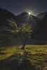 L E A F - A L B E D O (elganjones1) Tags: moonrise snowdonia cymru wales nant ffrancon sony a7s samyang 24mm landscape light hawthorn lone tree