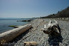 A bright sunny afternoon at Ross Bay, Victoria, BC. #seashore #victoriabccanada #victoriabc #driftwood #landscapephotography @dailyviewvictoria (Norm-Hamilton) Tags: seashore victoriabccanada landscapephotography driftwood victoriabc