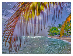 Afternoon in Paradise (Timothy Valentine) Tags: 2018 0418 palm caribbean beach people sky vacation sliderssunday bridgetown christchurch barbados bb