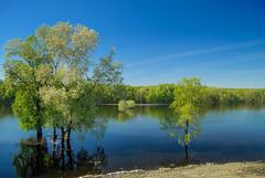 swampscape (rasa@1975) Tags: serbia srbija nikkor nikon twop outdoor lightroom sky blue green flickr artland art artofphotography explore weather water reflection tree landscape