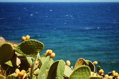 Living in Greece: pick a colour to fit with the endless blue (jimiliop) Tags: sea blue cactus sky horizon endless fruits green waves peloponese greece summer relaxing nature flora wild hardlight sunshine