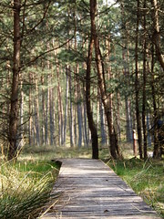8 (silvy-s) Tags: nature borytucholskie trees m43 epl1 forest