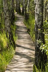 Ścieżka Spławy (konradpoland) Tags: poland outdoor polska nikon d5200 poleski park narodowy lubelskie sigma 105mm trail trees willow green wood path sunny spring
