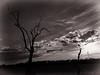 once upon a time (FotoTrenz NRW) Tags: tree gloomy sky clouds bird landscape lonesometree fantasyart darkart gloomypics monochrome schwatzweis shillhouette contrast evening moody moodypic