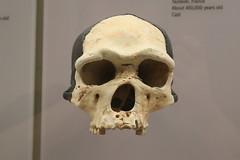 Homo heidelbergensis (Itinerant Wanderer) Tags: washingtondc smithsonian nationalmuseumofnaturalhistory