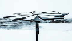 "Tracking solar ""flower"" under snow (Brian Kermath (e.h.designs)) Tags: snow trackingsolarflower solarflower photovoltaicpanel solarpanels universityofwisconsinoshkosh oshkoshwisconsin solarenergy oshkosh wisconsin snowstorm solarpanel tiretracks solardaisy trackingsolarpanel renewableenergy energy snowcovered"