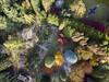 DJI_0287a (ManFromOz) Tags: ©geoffsmith gemaxphotographics aerial autumn dji mavicpro drone mountwilson bluemountains